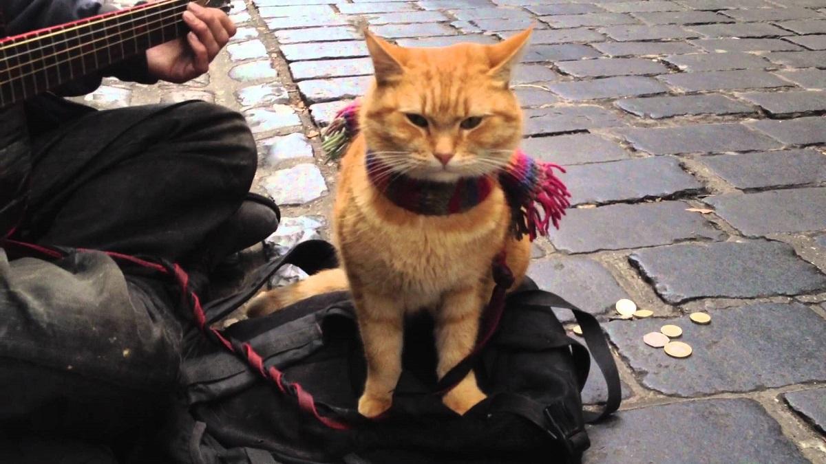 A Cat Named Bob Movie